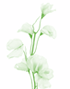 annuals-icon